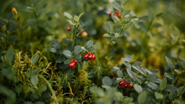 More About Bearberry Extract Unraveling The Secret to Younger-Looking Skin article image by Mayerling Skincare